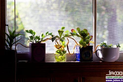 آبیاری گیاهان با استفاده از فتیله