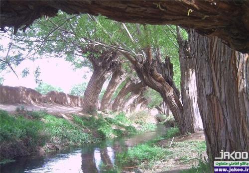 خروج ماهی از چشمه جوشان غربال بیز یزد