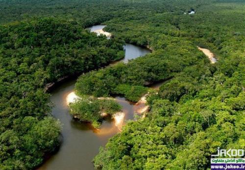 شگفتانگیزترین پوشش گیاهی جهان در جنگلهای حرای خلیج فارس