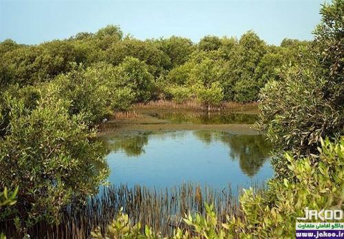 آب تنی در جنگل های پر از آب حرای خلیج فارس