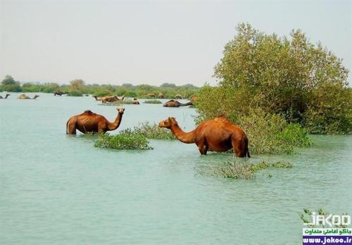 تنوع گیاهی و جانوری در جنگل های حرا