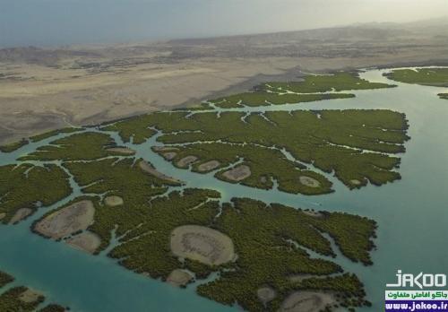 زیباترین جنگلهای ایران با نام حرا در خلیج فارس و هرمزگان