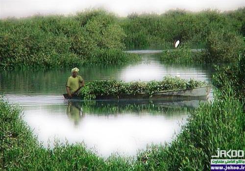 کانونهای تنوع زیستی کره زمین در جنگل زیبا سرسبز حرا