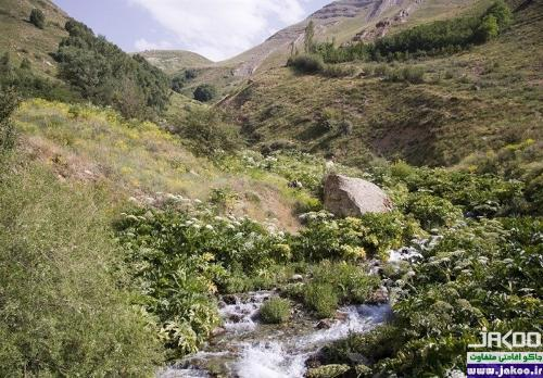 روستای پر از باغ حسنکدر در جاده چالوس